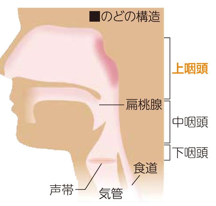 上咽頭炎(のど風邪)